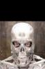 biorobot avatar